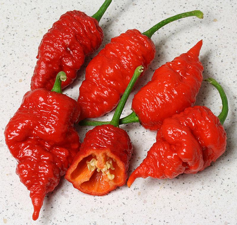 Chili Seeds DG