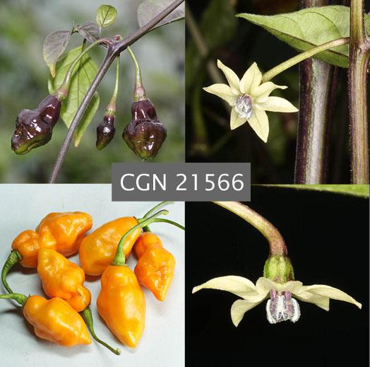 CGN 21566