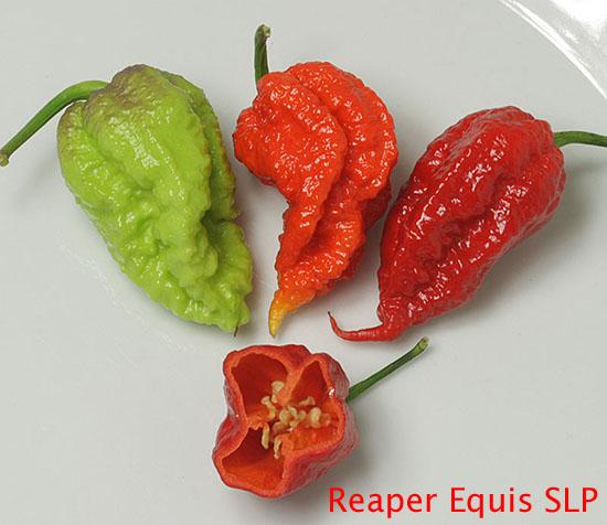 Reaper Equis